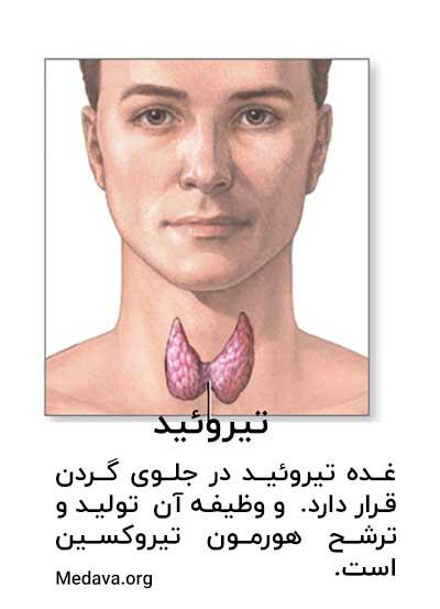 غده تیروئید در جلوی گردن قرار دارد . وظیفه آن تولید و ترشح هورمون تیروکسین است.